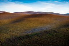 Cypress tree in a Tuscan valey. Lonely cypress tree in a Tuscan valey stock images