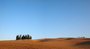 Cypress tree Tuscany landscape Stock Image