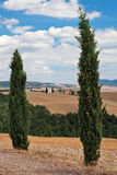 Cypress trees. Cypress trees and Tuscan landscape in background Royalty Free Stock Photos