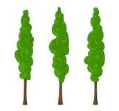 Cypress trees. Green cypress trees, vector illustration Royalty Free Stock Photo