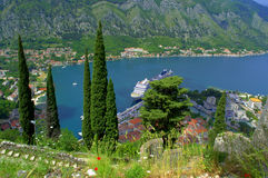 Cypress trees above Kotor bay Royalty Free Stock Photo