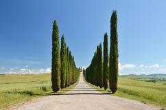 Cypress trees along rural road Royalty Free Stock Photo