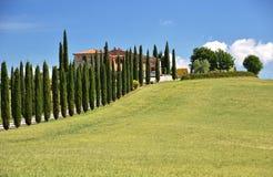Cypress trees along rural road Stock Photo
