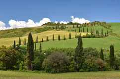 Cypress trees along winding rural road Royalty Free Stock Photography