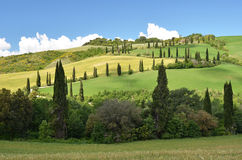 Cypress trees along winding rural road Royalty Free Stock Images