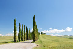Cypress trees along winding rural road Stock Images