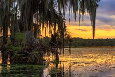 Another bayou sunset. Cypress trees in the bayous of Louisiana in foreground with orange skies at sunset Royalty Free Stock Photography