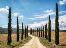 Cypress trees Stock Photos