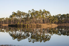 Cypress trees in the Everglades National Park Stock Photo