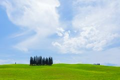 Cypress trees in green wheat field in Tuscany, Italy Stock Images
