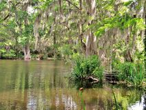 Free Cypress Trees Growing In Wet Marsh Land Stock Photos - 102606763