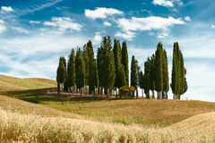 Cypress trees landscape Stock Images