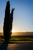 Napa in Winter Royalty Free Stock Photos