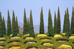 Cypress trees in park Stock Photography
