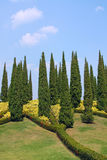 Cypress trees in park Royalty Free Stock Photo