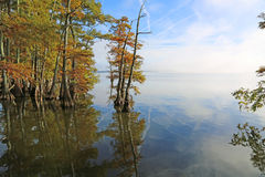 Cypress trees on Reelfoot Lake Stock Photography