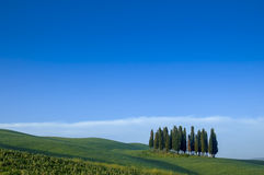 Cypress trees on a ridge, Italy Royalty Free Stock Image