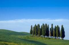 Cypress trees on a ridge, Italy Royalty Free Stock Photography