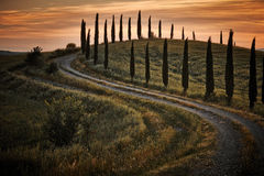 Cypress trees on the road to a farmhouse in the Tuscany Stock Image