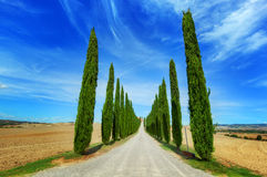Cypress trees road in Tuscany, Italy Royalty Free Stock Image