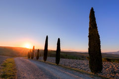 Cypress trees road in Tuscany, Italy at sunrise. Val d'Orcia Royalty Free Stock Photo