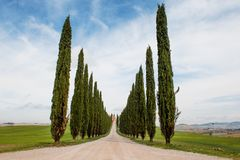 Cypress trees row and road in tuscan landscape, Tuscany, Italy royalty free stock photos