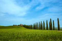 Cypress Trees rows and a white road, rural landscape in val d Orcia land near Siena, Tuscany, Italy. royalty free stock image
