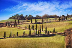 Cypress trees scenic road. Siena, Tuscany, Italy. Stock Photography
