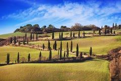 Cypress trees scenic road. Siena, Tuscany, Italy. Stock Photography