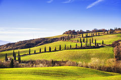 Cypress trees scenic road. Siena, Tuscany, Italy. Royalty Free Stock Images