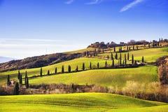 Cypress trees scenic road. Siena, Tuscany, Italy. Royalty Free Stock Images