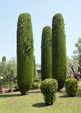 Cypress Trees at Sirmione Royalty Free Stock Photo