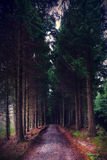 Cypress trees surrounding path Stock Images