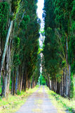 Cypress trees in Tuscany. Cypress trees on both sides of a country road in Tuscany, Italy Royalty Free Stock Photo
