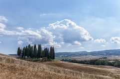 Cypress trees in Tuscany countryside Royalty Free Stock Photos