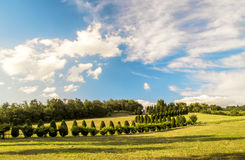 Cypress trees in Tuscany. A farm with classic cypress trees in the valley of Mugello in Tuscany (Italy Stock Images