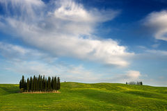 Cypress trees in a Tuscany landscape royalty free stock images