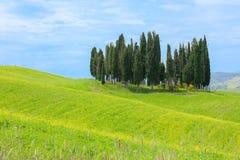Cypress trees in Tuscany Royalty Free Stock Photos