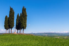 Cypress trees typical Tuscany landscape springtime at sunrise. In Italy,Europe Stock Photos