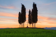 Cypress trees typical Tuscany landscape springtime at sunrise. In Italy,Europe Royalty Free Stock Images
