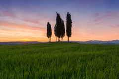 Cypress trees typical Tuscany landscape springtime at sunrise. In Italy,Europe Stock Images