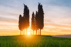 Cypress trees typical Tuscany landscape springtime at sunrise. In Italy,Europe Stock Photography