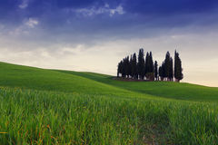 Cypress trees typical Tuscany landscape springtime at sunset. In Italy,Europe Stock Photo