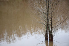 Cypress trees in water Stock Photography