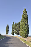 Cypress trees on winding country road Royalty Free Stock Photos