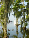 Cypress Trees4. A tug and barge passing at the edge of a cypress swamp Royalty Free Stock Image