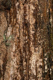 Cypress Trunk. Close up view of a cyrpress trunk Stock Photos