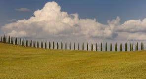 cypress tuscan Royaltyfria Bilder