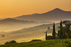 Cypress in Tuscan Countryside, Italy Royalty Free Stock Photo