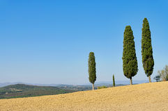 cypress tuscany Royaltyfri Bild